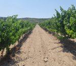 El PP propone impulsar el Turismo de Montilla con Campañas de Turismo de Cercanía y Bonos Turísticos