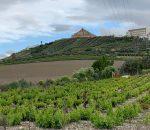 982 viticultores se benefician de ayudas por más de un millón de euros